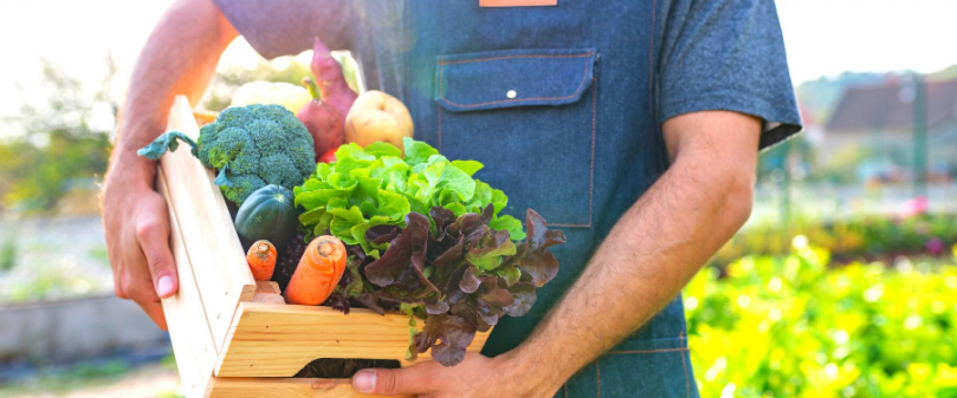 Conheça os principais benefícios de consumir orgânicos