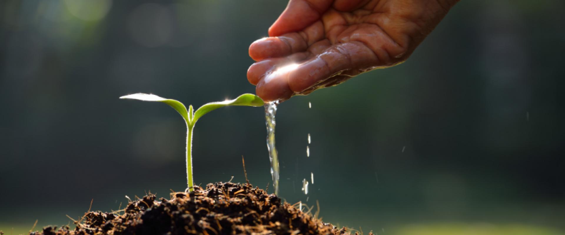 5 vantagens do plantio orgânico para o meio ambiente
